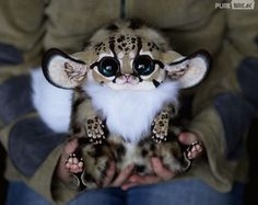 OMG!!!  How cute is this?
