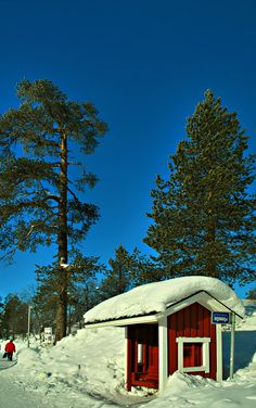 10 Reasons You Should be Planning Your Lapland Adventure Now | Travel on the Brain