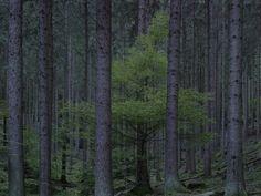 Le photographe Michael Lange a passé trois ans à se promener dans les forêts d'Allemagne pour réaliser cette série de photographies de sous-bois regroupées dans son livre WALD – Landscapes of Memory.