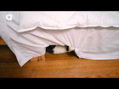 Fully Feline Pudge T