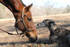 Love this shot of former racers, Less is More (TB) and Go Peanut Go (Greyhound).