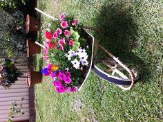 My wheelbarrow of colour