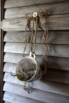 Darling bird nest in tea cup