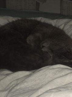 My cat xoxo