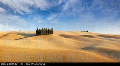 Cypress trees, Val d'Orcia, Tuscany, Italy. © Jan Wlodarczyk / age fotostock - Stock Photos, Videos and Vectors