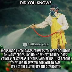 It's not the gluten, it's the glyphosate! #boycottgmo, #boycottmonsanto, #boycottroundup