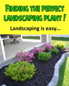DIY Landscaping: Looking for just the right landscaping plant?