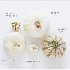 the art of slow living — Heirloom Pumpkin Varieties for Fall Pumpkin Varieties, Happy Fall Y'all, Plantar, Autumn Home, Autumn Inspiration, Fall Pumpkins, Fall Halloween, Halloween Queen, Halloween 2020