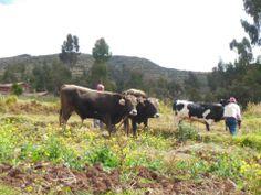 AgroTurismo