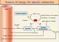 physiology of excitable tissues pdf