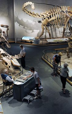 Prehistoric Journey
