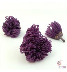 Crisantemo Anastasia preservado. #crisantemo #lila #flores #preservadas