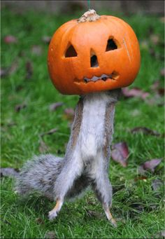 Have a Chipper Halloween! Here's a healthy snack to try this holiday!