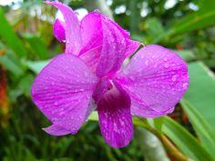 9/29(金)バリ島ウブドのお天気は雨。室内温度28.6℃、湿度71%。もう雨季に入ったかのような天気が続いています。午後になるとほぼ雨が降る日が続いています。