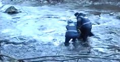 See The Moment Rescuers Save A Dying Wolf From An Icy River via LittleThings.com