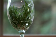 Root rosemary in wine glasses