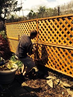 Adding lattice to cover a chainlink fence using zip ties. So simple!