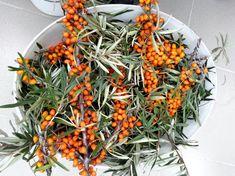 homoktovis termesztese 15 ev 01 Kefir, Wreaths, Fall, Autumn, Door Wreaths, Fall Season, Deco Mesh Wreaths, Floral Arrangements, Garlands
