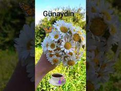Günaydın mesajı | resimli günaydın mesajları - YouTube Plants, Youtube, Plant, Youtubers, Youtube Movies, Planets