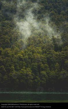 Foto 'Nebel über dem Wald' von '50Centimos'