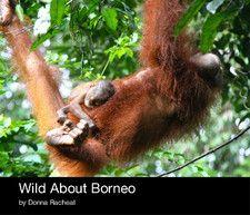 Wild About Borneo