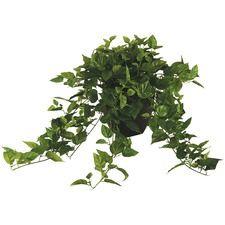 Cheap Furniture | Furniture Sale | Temple & Webster Ivy Plants, Faux Plants, Plastic Vase, Flowers For Sale, Floral Foam, Types Of Plants, Artificial Plants, Hanging Plants, Plant Care