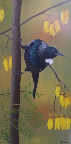Tui in Kowhai tree- by New Zealand Artist Robyn Hall - Original sold - Prints… New Zealand Art, Nz Art, Kiwiana, Painted Rocks, Nativity, Birds, Ink, Rock Painting, Artist