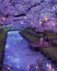 Saitama Japan Looks Like A Van Gogh Painting - Album ; saitama japan sieht aus wie ein van gogh gemälde - album Saitama Japan Looks Like A Van Gogh Painting - Album ; Beautiful Places To Travel, Beautiful World, Beautiful Beautiful, Beautiful Sunset, Wonderful Places, Nature Photography, Travel Photography, Photography Ideas, Cherry Blossom Japan
