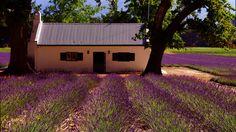 Lavender-Fields-In-France.jpg (1024×576)