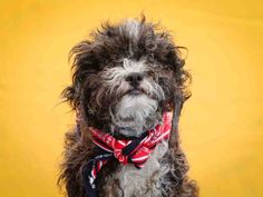 Animal ID #A4879126 I am a Male, Black & White Miniature Poodle mix. The shelter thinks I am about 3 years and 6 months old. I have been at the shelter since September 18, 2015. L.A. County Animal Care Control: Carson Shelter Telephone ‒ (310) 523-9566 216 West Victoria Street Gardena, CA https://www.facebook.com/OPCA.Shelter.Network.Alliance/photos/pb.481296865284684.-2207520000.1443910261./904776246270075/?type=3&theater