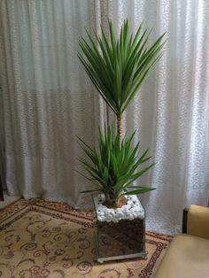 Yucca - separar sala de estar da sala de jantar. uma opção é a planta artificial