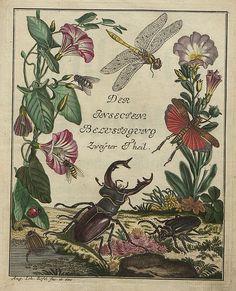 Insecten-Belustigung V.2 frontispiece | bibliodyssey.blogspo… | Flickr