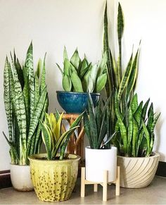 Zimmerpflanzen 80 DIY Plant Stand Ideas To Fill Your Room With Greenery A Glimpse Into The Holistic House Plants Decor, Plant Decor, Planting Succulents, Planting Flowers, Succulent Plants, Sansevieria Plant, Decoration Plante, Diy Plant Stand, Plant Stands