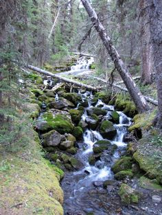 One of multiple moss-bordered creeks along North Ribbon Creek Trail in Kananaskis Country, Alberta, Canada.