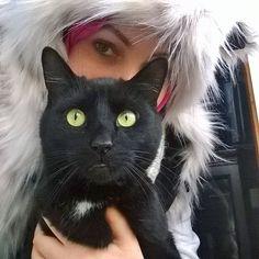 black  cat hijabi :