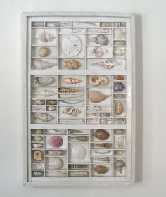 seashell art composition in a printers type box by xenasdad, $500.00
