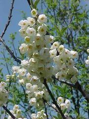 285 Best Bridgeport Plants Trees Images Trees To Plant