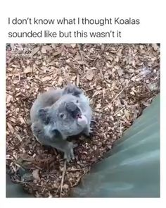 Well now, that doesn't sound like I thought it would. 🤔 Well now, that doesn't sound like I thought Animal Jokes, Funny Animal Memes, Funny Animal Pictures, Animal Captions, Cute Little Animals, Cute Funny Animals, Funny Cute, Funny Dog Videos, Funny Dogs