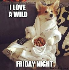 Corgi in a white robe watching tv holding the remote and eating doggy snacks Cute Puppies, Cute Dogs, Dogs And Puppies, Baby Animals, Funny Animals, Cute Animals, Animal Fun, I Love Dogs, Puppy Love
