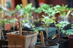 Growing vegetables indoors when it's too cold outside