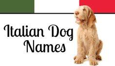 """Italian Dog Names = ..."""" a lealdade canina é indiscutível, confira nosso top10 e de sua opinião:  se faltou filmes; qual você se emocionou mais e seu favorito.  Lembre-se, ame seu cachorro, ele faria ate mais que os cães a baixo"""". = FACE / nota de Via Animal Pet Shop. 1 de junho de 2015 às 21:55 ·  Via Animal Pet Shop 13082014 às 12:02 ·  Top10 filmes"""