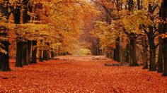 The Netherlands' De Hoge Veluwe National Park is full of magnificent landscapes: expanses of heathland and grassland alternate with drift sands and deciduous and coniferous forests. In the fall, these landscapes turn vibrant colors.