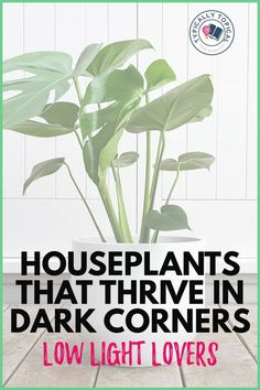 Want to add a touch of greenery to your home but live in a shady environment or don't have much sunlight? No worries. Here are 11 of the best air purifying indoor house plants that don't need sunlight. Plus, these indoor house plants are low maintenance, super hard to kill and very resilient to most indoor environments. Perfect for beginners. These plants can be found at most hardware or garden centres. #houseplants #gardening #indoorplants