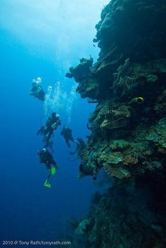 - SCUBA diving Lighthouse Reef (its been a long time, don,t remember walls) Diver Down, Best Hotel Deals, Underwater World, Underwater Photography, Marine Life, Sea Creatures, Snorkeling, Scuba Diving, Under The Sea