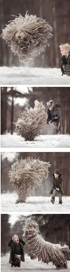 This Komondor Dog Playing With A Kid Will Make Your Day #by Andy Seliverstoff on www.boredpanda.com