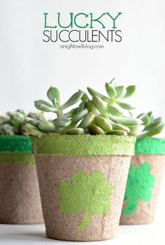 Lucky Succulents - a