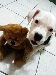 Meu amigo urso.