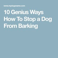 10 Genius Ways How To Stop a Dog From Barking