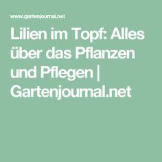 Lilien im Topf: Alles über das Pflanzen und Pflegen   Gartenjournal.net