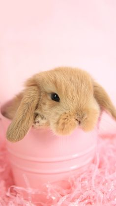 Rabbit Wallpaper, Bunny Rabbit, Easter Bunny, Cute Animals, Pictures, Wallpapers, Ipad, Holidays, Pretty Animals